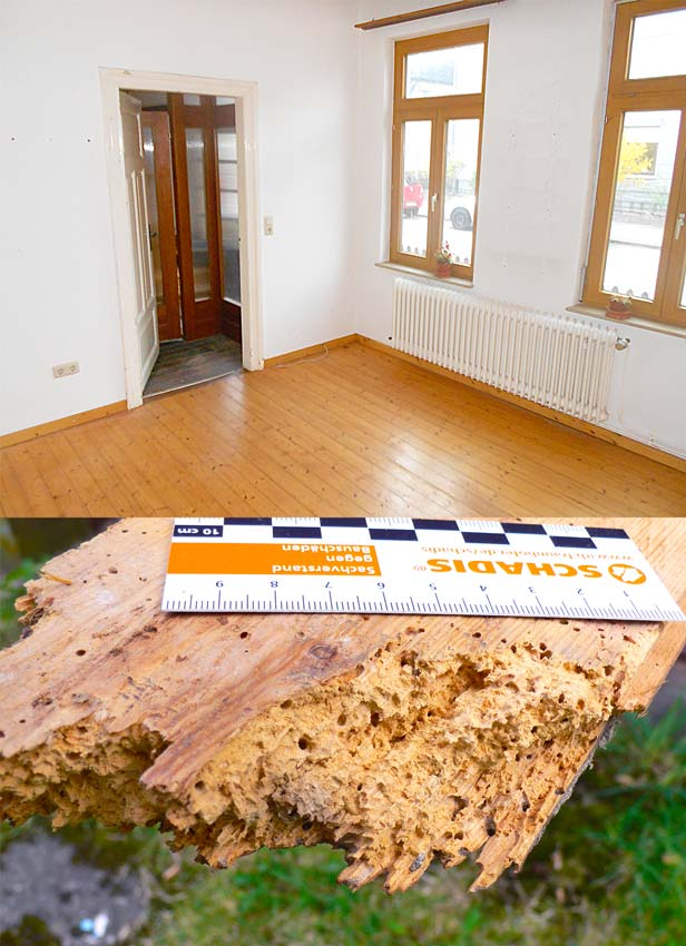 Altbau Fussboden Holzwurm Sanierung