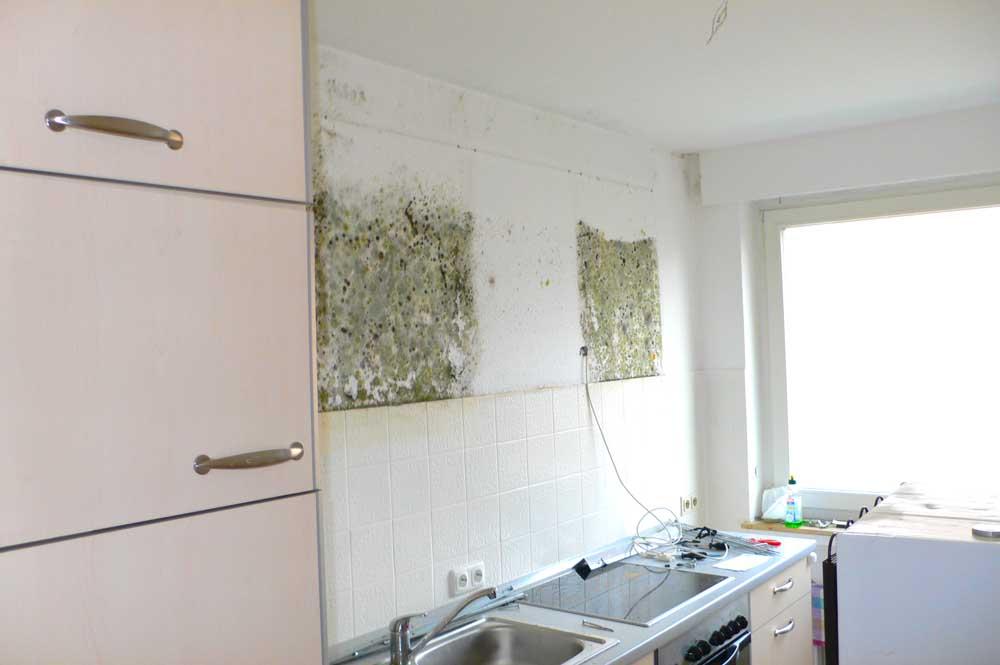 Schimmel in Küche