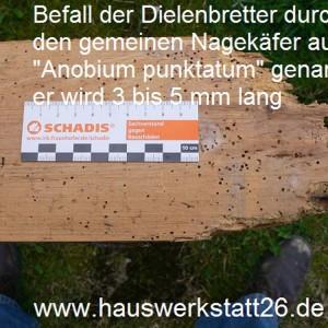 3-Holzwurm-der-gemeine-Nagekaefer-sieht-dem-Brotkaefer-sehr-aehnlich-er-braucht-Holzfeuchte-ueber-zehn-prozent-Anobium-punktatum