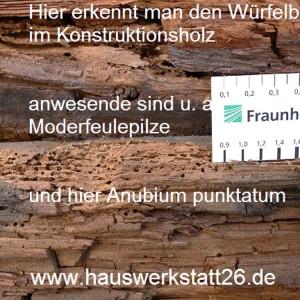 4-Schlauchpilze-oder-Moderfaeulepilze-bauen-sowohl-Cellulose-und-Hemicellulose-ab-dadurch-dunkle-Faerbung-Bausachverstaendiger-Bremen